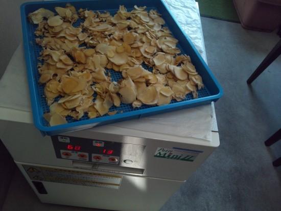 生姜の乾燥